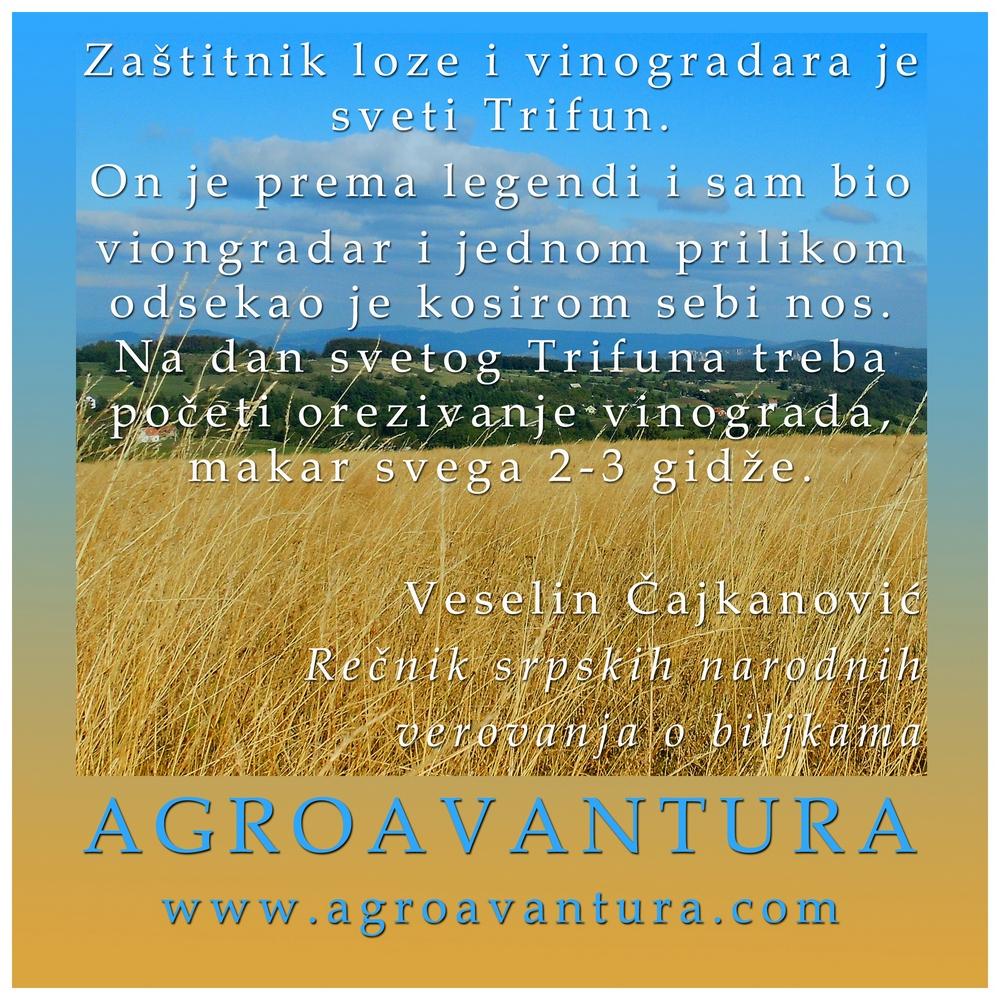 Vinova Loza 03